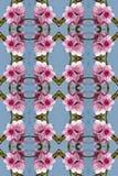 Seamless peach flowers pattern. Stock Photos