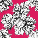 Seamless peony pattern on pink background Royalty Free Stock Images