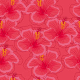 Seamless pink background with pink hibiscus flowers. Royalty Free Stock Photo