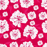 Seamless pink background with white flowers Royalty Free Stock Image