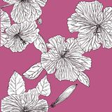 Seamless pink pattern with hibiscus. Hand drawn. Graphics stock illustration
