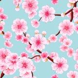 Seamless of pink Sakura. EPS 10 Stock Photo