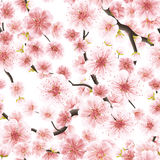 Seamless pink Sakura flowering cherry. EPS 10 Stock Photo