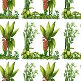 Seamless plants Stock Photo