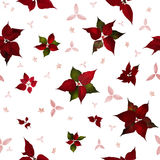 Seamless Poinsettia Christmas Flowers. Seamless christmas star flower, poinsettia, in studio photographed back light, with variations and structured stars and Stock Photos