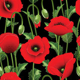 Seamless from poppies. Stock Photography