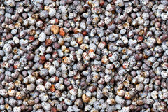 Seamless poppy grains close up background Stock Photos