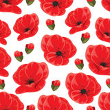 Seamless poppy pattern Stock Photos