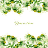 Seamless postcard, frame border with green camomiles painted in watercolor on a white background. Template of postcard, frame border with green camomiles painted Stock Images