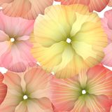 Seamless Primula Flowers 1 Stock Photography