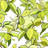 Seamless psttern of branches with green leaves Royalty Free Stock Images