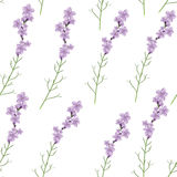 Seamless realistic lavender flower vector illustration pattern Stock Image