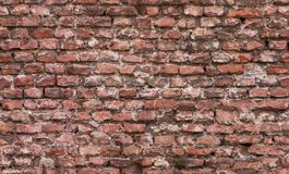 Seamless brick wall texture Stock Images