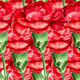 Seamless red carnation Royalty Free Stock Image