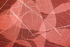 Seamless red leaves pattern, texture for background. Stock Image