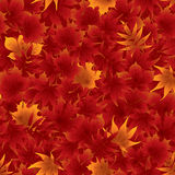 Seamless red maple leaves pattern Royalty Free Stock Photo