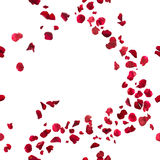 Seamless Red Rose Petals Breeze. Seamless, red rose petals breeze, studio photographed in depth of field, isolated on white royalty free stock images