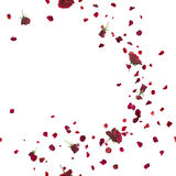Seamless Red Roses Breeze on White. Red roses breeze curve with petals, repeatable and isolated on white stock image