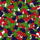Seamless Redcurrant and Blackcurrant Pattern Royalty Free Stock Photos