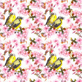 Seamless repeated floral pattern - pink cherry sakura and apple flowers. Watercolor Stock Photography