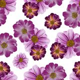 Seamless repeating pattern of wildflowers. Vector Royalty Free Stock Image