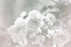 Seamless romantic background Royalty Free Stock Image