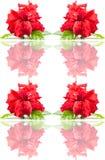 Seamless rose  pattern. Royalty Free Stock Image
