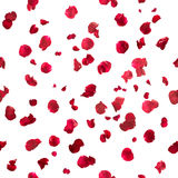 Seamless rose petals royalty free stock photos