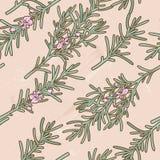 Seamless rosemary background Royalty Free Stock Image