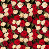 Seamless roses background Royalty Free Stock Images