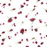 Seamless roses in dark red. Repeatable background of fading, flying roses and petals in dark red, studio photographed with a back light, isolated on white Royalty Free Stock Photography