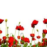 Seamless row of poppies stock photos