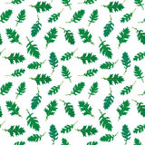 Seamless rucola pattern Royalty Free Stock Photography