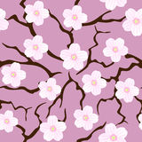 Seamless sakura blossom. On pink stock illustration