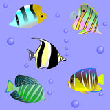 Seamless sample with sea fish Royalty Free Stock Images