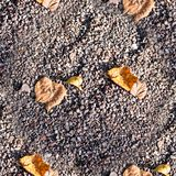 Seamless sandy stone ground with autumn leaves. background, texture. Royalty Free Stock Photos