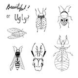 Seamless  set with hand drawn insects. Stock Images