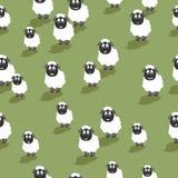Seamless sheep stock photography