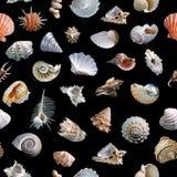 Seamless shells black background. Stock Images
