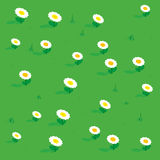 Seamless simple flowers patterns isometric view. Meadow with flowers tulip, chamomile and grass. Vector illustration Stock Photos