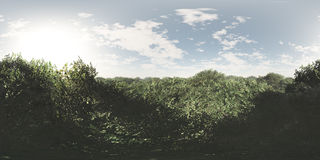 Seamless 360 Sky And Forest Landscape Panorama. Seamless 360 sky and forest panorama environment. Suitable for 3D renderings as background mapped on a sphere Royalty Free Stock Images