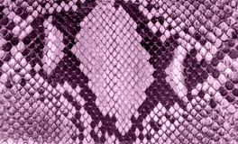 Seamless snake skin texture. Fashion for tropical reptiles. Dyed purple snake skin. Lilac background royalty free stock images