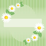 Seamless spring chamomile Stock Image
