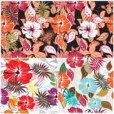 Seamless  spring flower illustration Royalty Free Stock Photos