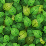 Seamless Spring Leaves Background Royalty Free Stock Photo