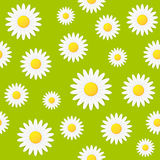 Seamless spring natural daisy flower vector background Stock Photos