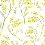 Seamless Spring Pattern with Sprig of Mimosa. Stock Photography