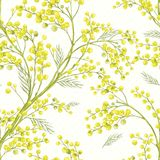 Seamless Spring Pattern with Sprig of Mimosa. Vector greeting card Stock Images