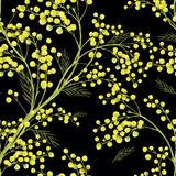Seamless Spring Pattern with Sprig of Mimosa. Vector greeting card Royalty Free Stock Photos