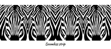 Seamless strip. Heads of zebras close up royalty free illustration